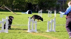 Hundetræning (Foto: hundeskole.dk)