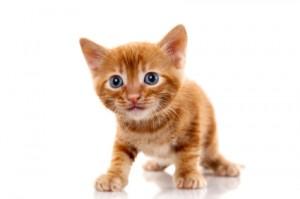 Kat (Foto: petworldkonkurrence.dk)