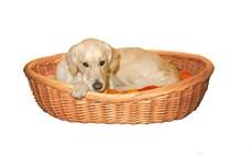 Du er selvfølgelig nødt til at have en hundekurv (Foto Petworld.dk)