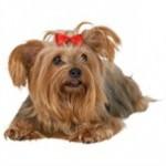 Fri din hund for allergi så den har det godt (foto: petworld-vet.dk)